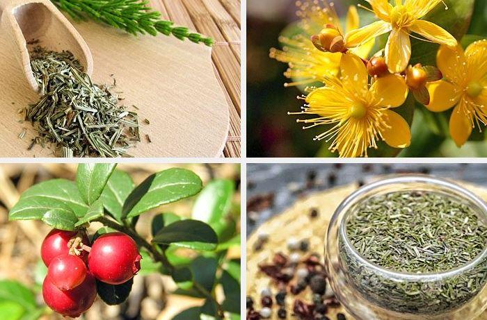 Лекарство от цистита на травах