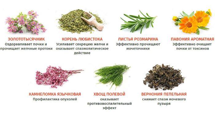 Трава лекарственная от цистита
