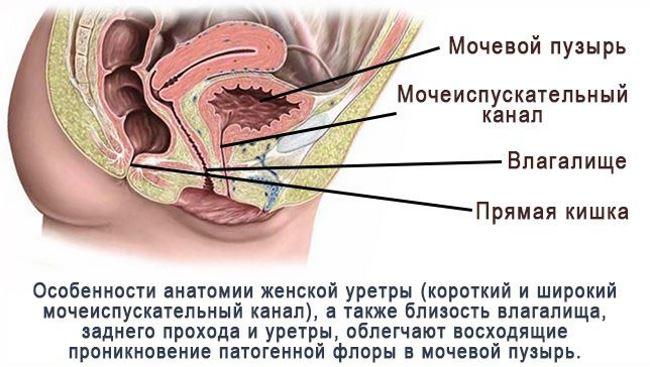 bolshoe-zhenskoe-vlagalishe-posle-seksa-kartinki